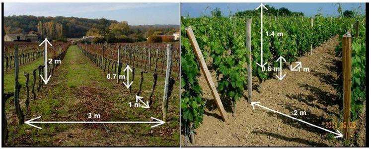 combien de plants de vigne peut contenir mon terrain viticulturevignoble. Black Bedroom Furniture Sets. Home Design Ideas